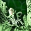 Salute: studio, i virus sono più pericolosi al mattino