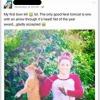 Veterinaria Trafigge Gatto con Una Freccia e Pubblica la Foto Su Facebook