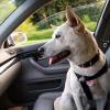 14 Consigli per Viaggiare con Cani e Gatti