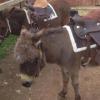 Per aiutare bambini e persone con problemi psichici, al via nel teramano progetti con i cavalli