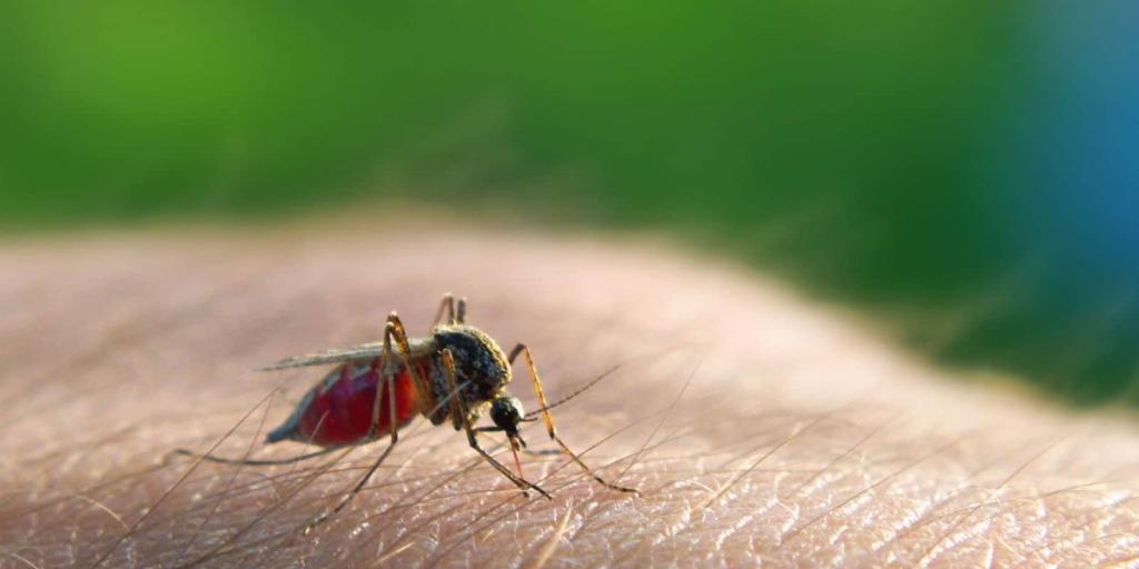 Bimba morta di malaria.
