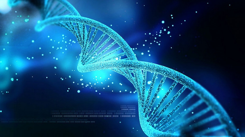 Usa, per la prima volta il DNA modificato all'interno del corpo