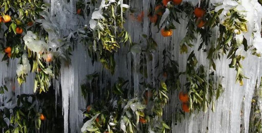 Coldiretti, febbraio +70% neve e pioggia Sos alberi