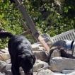 #Terremoto, ecco chi è Leo il Cane Eroe che ha Salvato la Piccola Giorgia