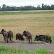 Fauna selvatica, allarme strade e campi Lettera aperta del presidente della CIA