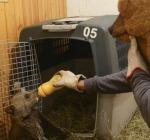orsa morrena allattamento