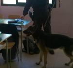 Ortona, blitz dei carabinieri con uità cinofila nelle scuole, trovata droga nascosta nei bagni