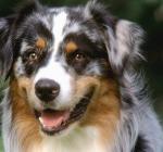 Per i Cani Abbaiare è un Diritto Sacrosanto. Il Tribunale di Lanciano fa Giurisprudenza