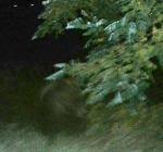 Incontro ravvicinato con un Orso per il presidente della Provincia Di Marco ad Abbateggio