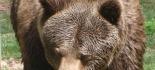 Le Incredibili Immagini dell'Orsa con il cucciolo nel Parco Nazionale d'Abruzzo