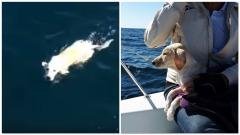 Salvataggio Labrador - foto da facebook RYCC Savoia