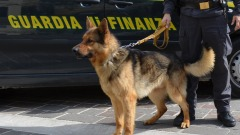 Gdf Pescara - operazione 'ARIOSTO 2013'