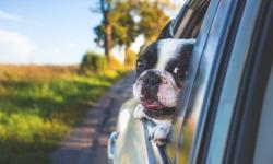 Vacanze all'estero con gli animali domestici: tutto quello che c'è da sapere
