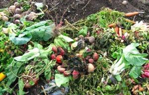 Odori nauseabondi dalla centrale a biogas di Roseto, cittadini in rivolta