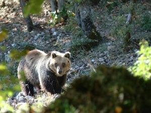 Parchi e Riserve, 7,5 mln da Fondi Ue Di Matteo, prima volta in Abruzzo risorse per aree protette
