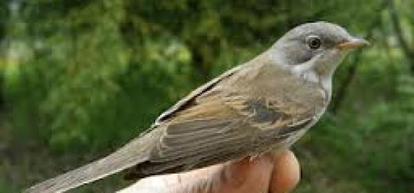 Inallenamento avifauna