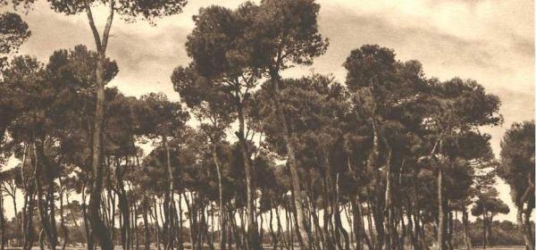 La pineta dannunziana a Pescara
