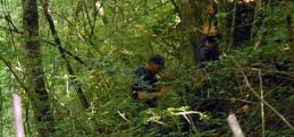ricerche nei boschi