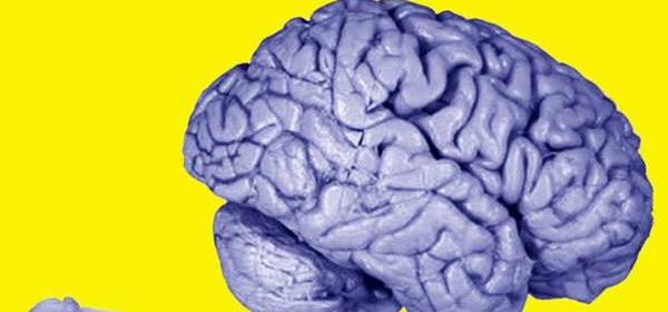 A confronto il cervello di una rana e quello umano
