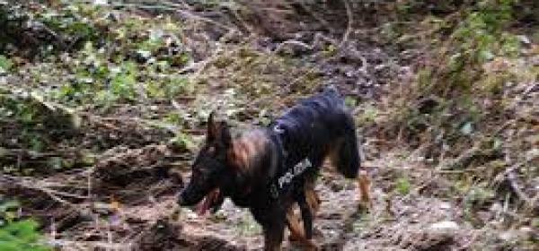 cane molecolare polizia