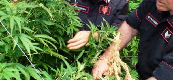 sequestro marijuana - foto di repertorio