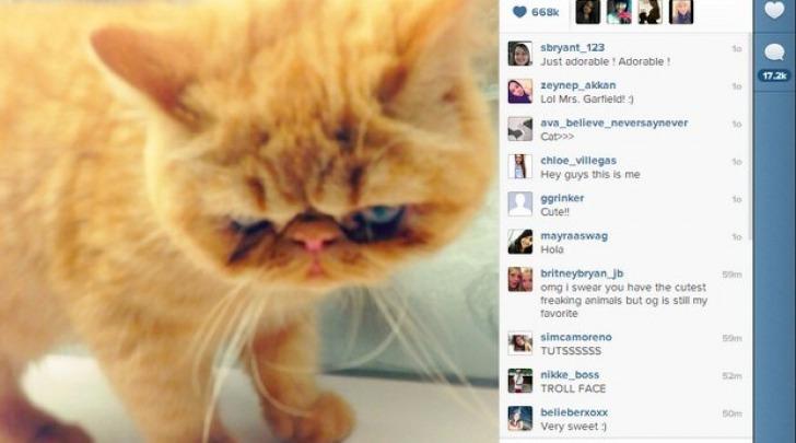 Tuts the cat di Justin Bieber