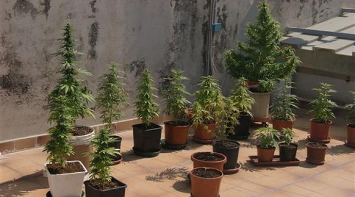 Marijuana balcone