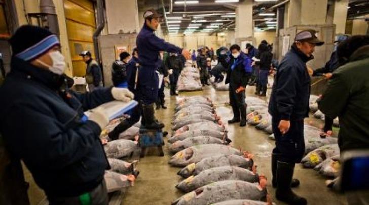 Tonni Fukushima