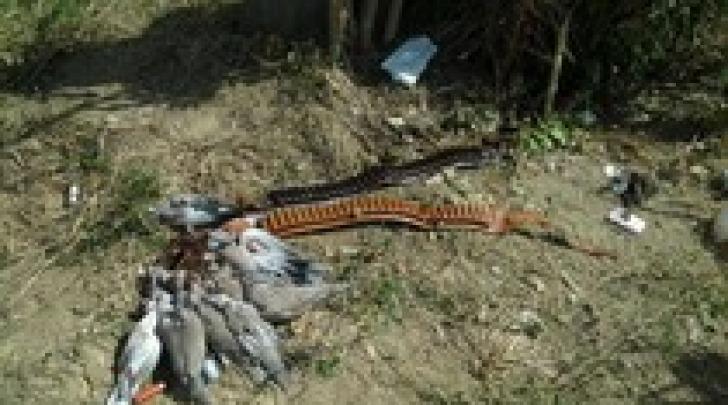 Le carcasse di tortore (foto Ansa)