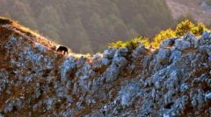 Orso sul monte serrone - foto di Paolo Forconi