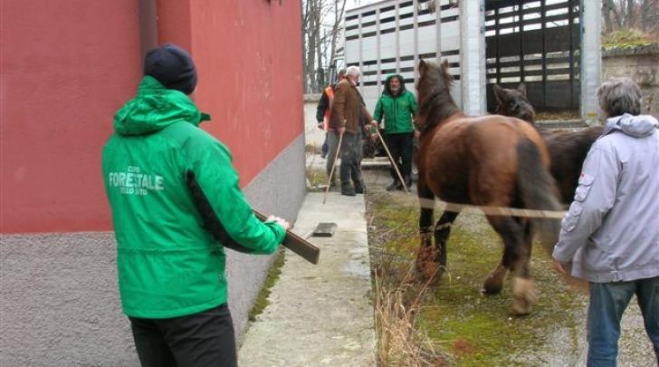 Forestale-cattura cavalli