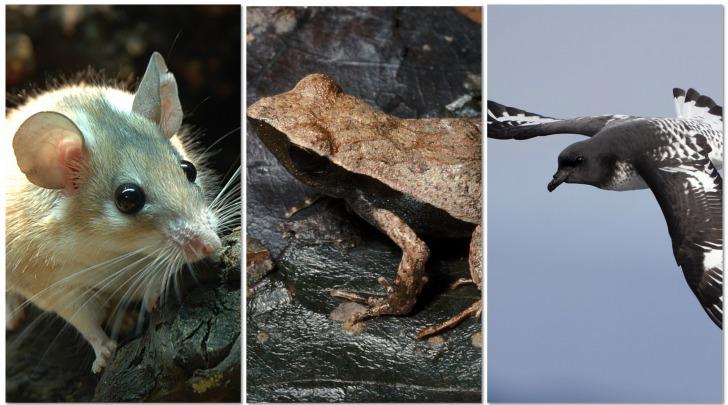 Specie a rischio estinzione