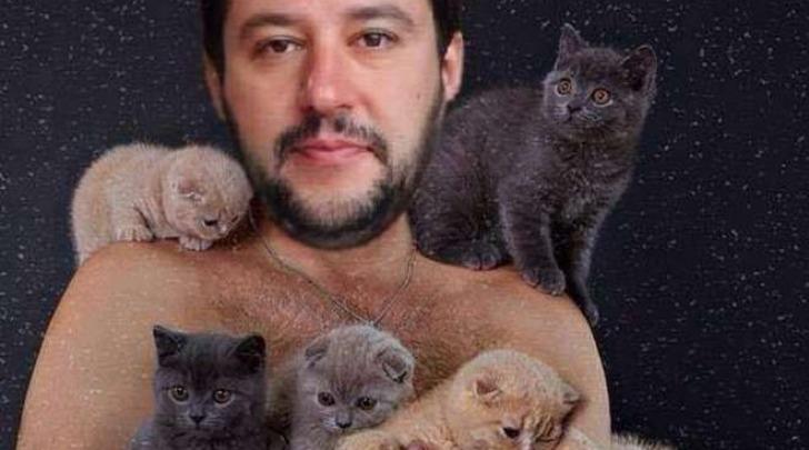 Gattini sulla bacheca di Salvini
