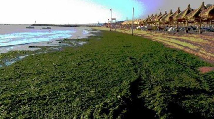 invasione alghe a Pescara