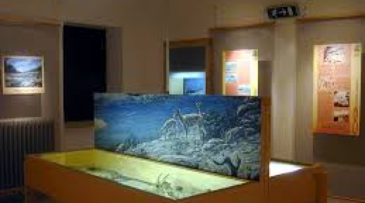 Museo Scotrone