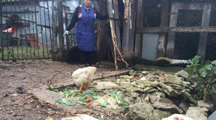 Pollaio visitato da orso-foto da Ansa