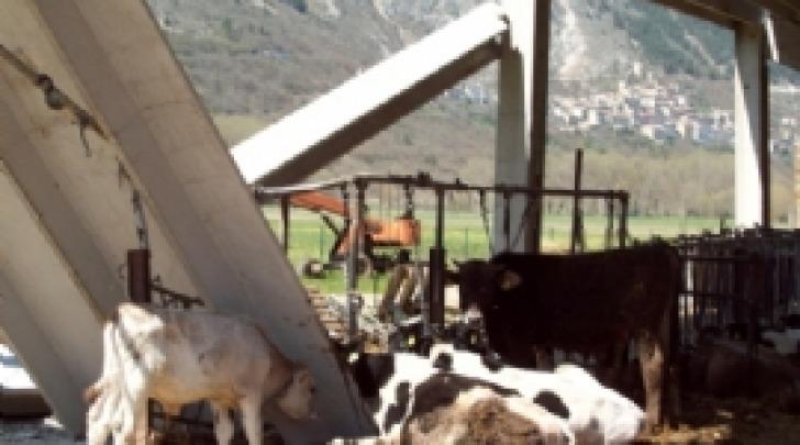 danni terremoto azienda agricola