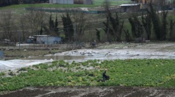 Gelata primaverile - danni all'agricoltura