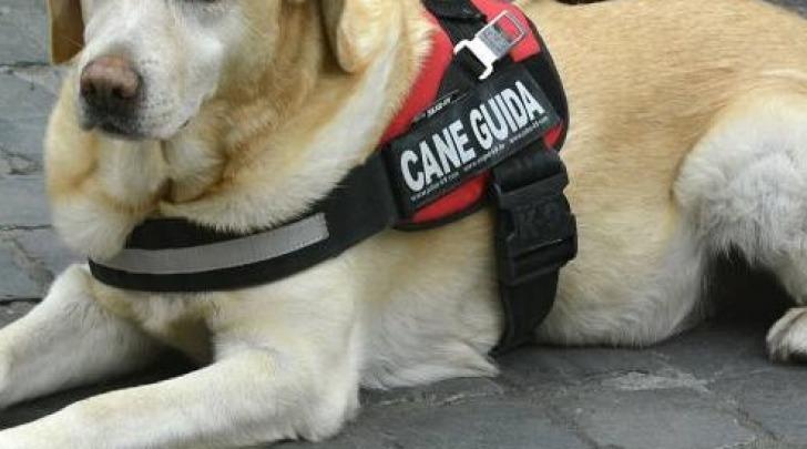 cane guida - immagine di repertorio