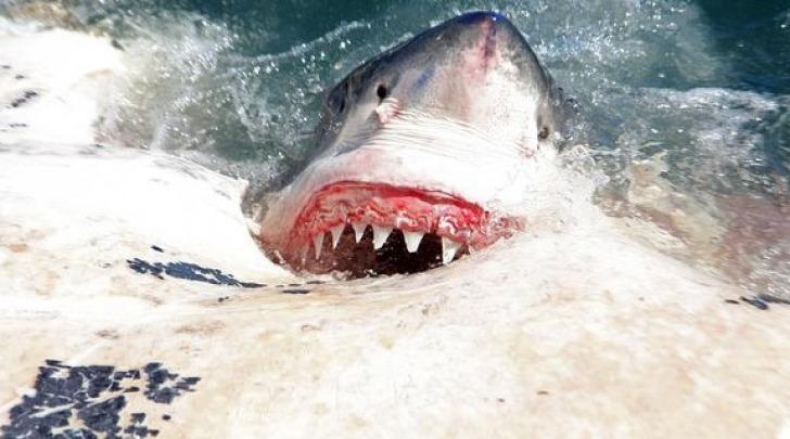 squalo - foto di repertorio