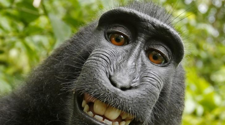 selfie macaco