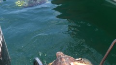 torre cerrano-rilascio tartaruga