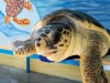 Quattro tartarughe torneranno in mare