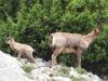 """Parco Nazionale dell'Aspromonte: la """"Valle Infernale"""" candidata a sito seriale UNESCO"""