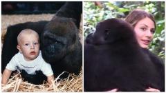 L'incontro tra il gorilla Djalta e Tansy Aspinall