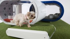 Dream Doghouse - Samsung