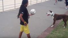 Il cane palleggia con il padrone