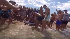 Bagnanti salvano squalo blu