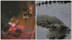 Orlando, Alligatore Trascina Bimbo Di 2 Anni In Acqua