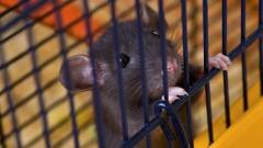 test cosmetici su animali